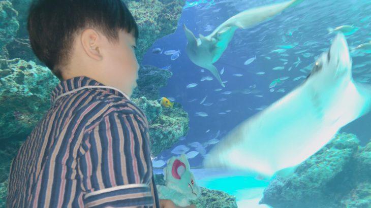 【水族館でもハプニング?!!】もんくん(長男)のお誕生日に池袋のサンシャイン水族館に行ったよ(お誕生日水族館編)