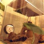 【爬虫類の冬仕度】冬の定番「暖突」をジェックスレプテリアクリア300キューブに取り付けてみた!超絶簡単で激安な爬虫類ケージDIY