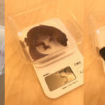 【レオパの体重測定】我が家のヒョウモントカゲモドキ達の体重測定を行いました!(2020年3月29日)
