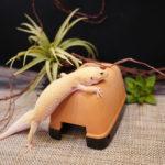 【爬虫類のシェルター選び】定番のスドー ウェットシェルターを全サイズ大人買い!比較あり